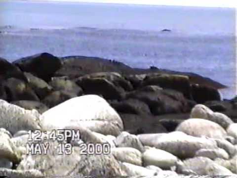Summer 2000 - Gannet Rock, Green Island, Tusket Islands, John's Island