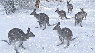В Австралии в разгар лета выпал снег. Что произошло в мире. Что произошло на планете.