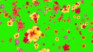 Flowers falling animation green screen effect