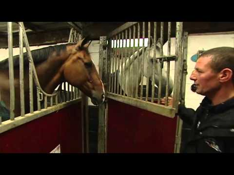 Showjumping - Guy Williams At Home - August 2011