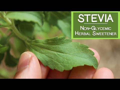 Stevia Sweetener, A Natural Non-Glycemic Herbal Sugar Substitute