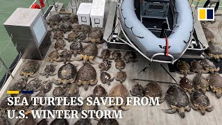 Thousands of 'cold-stunned' sea turtles rescued off Texas coast amid winter storm