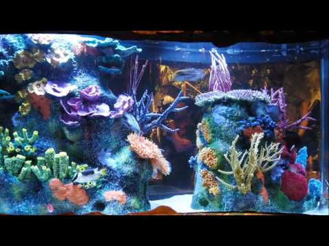 fish tank kings living color aquariums youtube. Black Bedroom Furniture Sets. Home Design Ideas