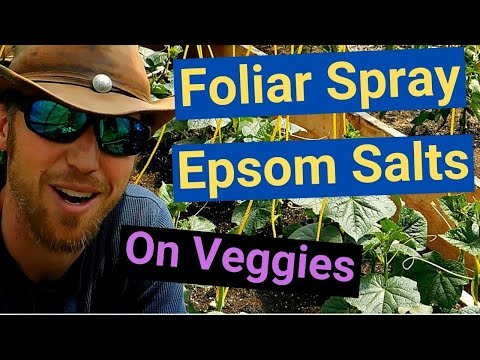How To Foliar Spray Epsom Salts On Vegetable Plants (tomato, Cucumber, Pepper) Quick And Easy