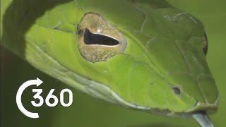 Costa Rican Jungle 360° | Planet Earth II thumbnail