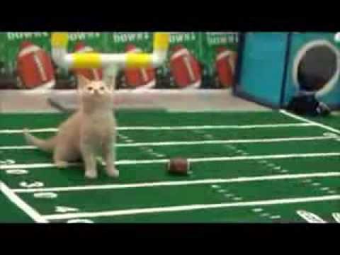 Cats vs Kittens - SUPER BOWL
