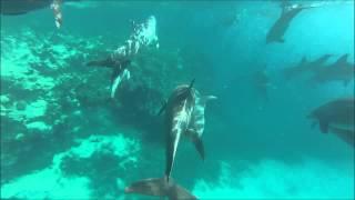 Delfine in Hurghada, Rotes Meer, Schnorcheln, Ägypten