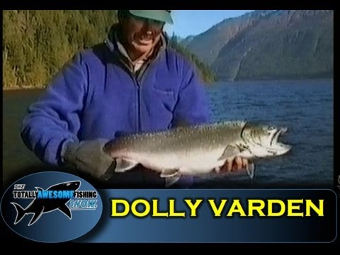 Dolly Varden Char Of Chilliwack Lake - Vintage - The Totally Awesome Fishing Show