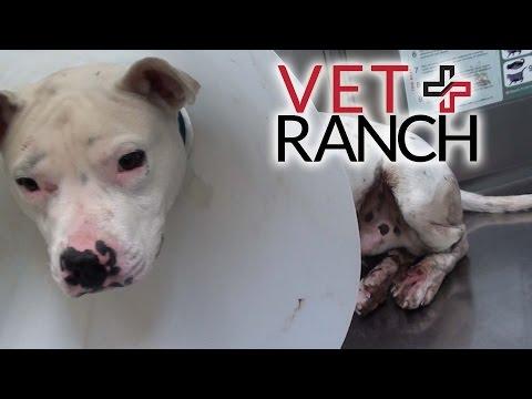 Deaf Dog Saved by Good Samaritan