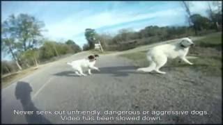 Воздействие Ультразвукового отпугивателя собак thumbnail