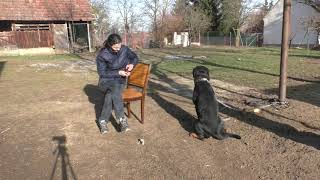 Rottweiler Futteraggression Part 2. Rottweiler feed aggression training Part 2.