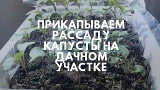 Прикапываем рассаду капусты на дачном участке(В видео рассказываю и показываю о рассаде капусты. Весенняя перевалка рассады капусты., 2016-04-18T06:20:02.000Z)