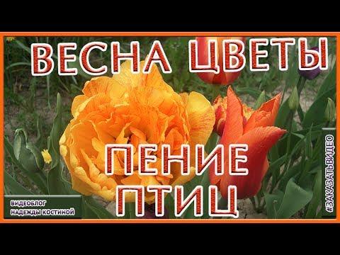 Покупайте луковицы крокусов с доставкой почтой по всей украине. Низкие цены на луковичные цветы в интернет-магазине укрсемена.