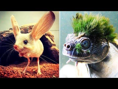 9 необычных существ, обитающих на нашей планете - Видео онлайн