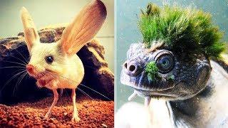 9 необычных существ, обитающих на нашей планете