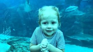 ВЛОГ для детей Поймали покемонов в самом большом ОКЕАНАРИУМЕ в мире Гигантский ОСЬМИНОГ и рыбка ДОРИ