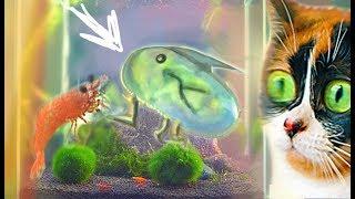 Im Unterwasser-Terrarium ist etwas neues aufgetaucht, was ist das?