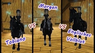 Star Stable [SSO]: ULTRA TEST ist der Morgan wirklich die schnellste Rasse?