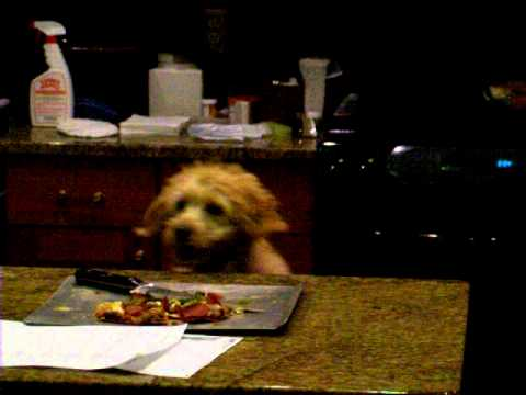 how to make a dog stop jumping on the counter