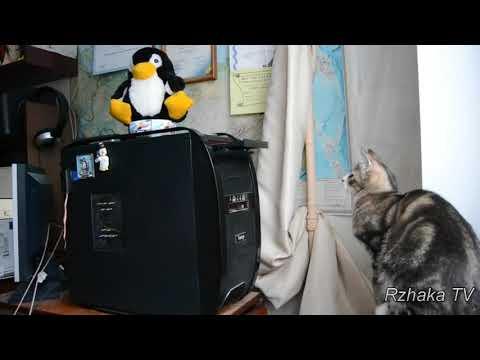Смешные приколы и фейлы с животными до,слез  ,,,)))смешные коты  #72    )))Попробуй не засмеяться)))