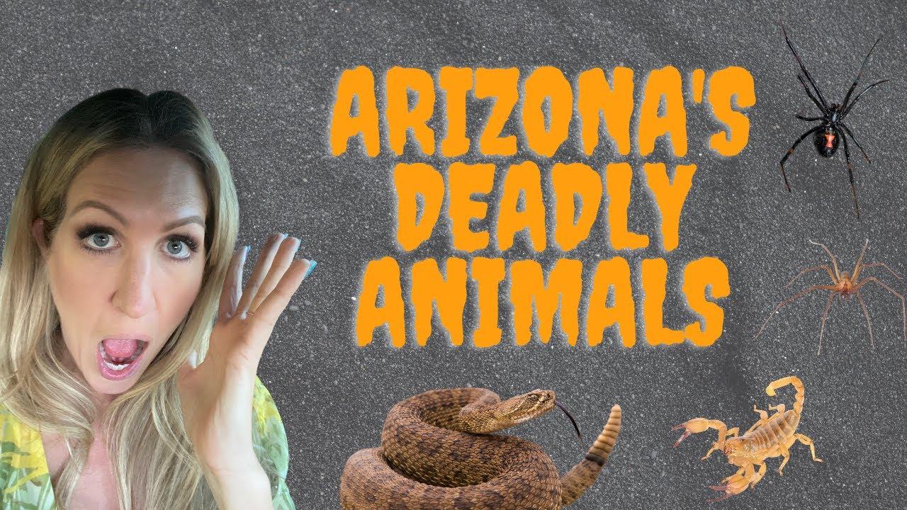Does Arizona Have Scorpions
