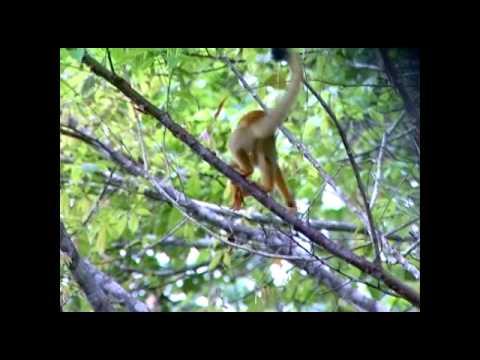 AE Costa Rica Primates