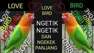 MP3 MASTERAN LOVE BIRD NGETIK NGETIK DAN NGEKEK