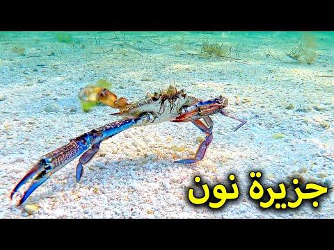 رحلة إلى جزيرة نون بالبحرين 🏖 Non Island in Bahrain