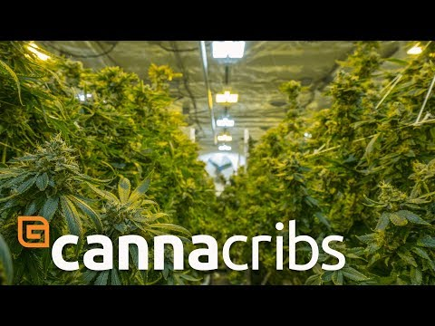 Canna Cribs: E2 - Grow Op Farms/Phat Panda - Cannabis Grow Operation in Spokane, Washington