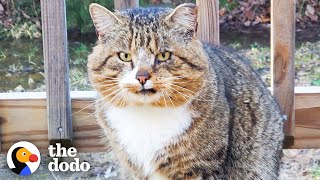 Hissing Feral Cat Becomes A Couch Potato | The Dodo Adopt Me!