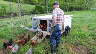 MY 100 Chick Plan to replace these Old Lady Hens