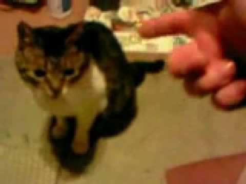 A CAT GETS SHOT DEAD LIVE ON VIDEO (with A Fake Gun)