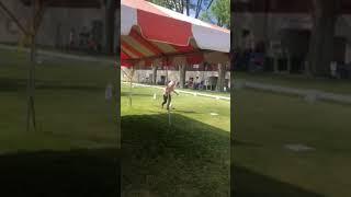 Navabo Diamond Maltese at Dog show in Idaho, USA 2021