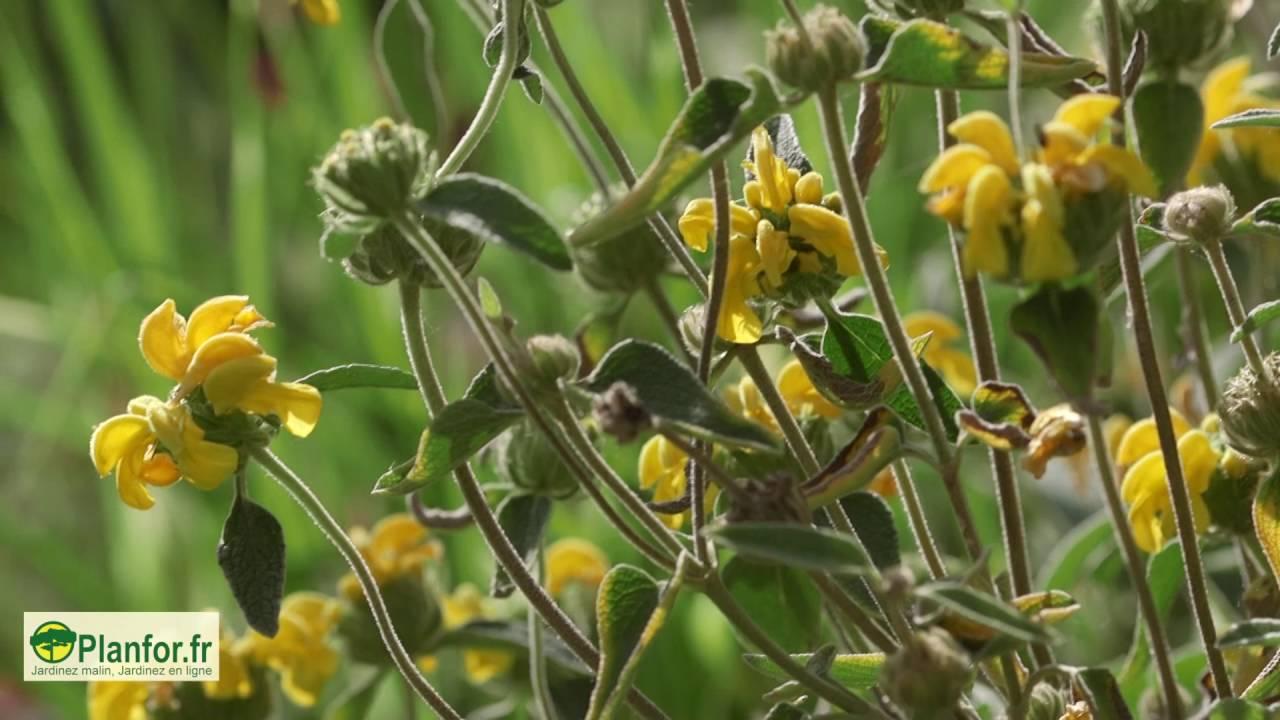 Planter Dans Un Talus un talus pour 4 saisons