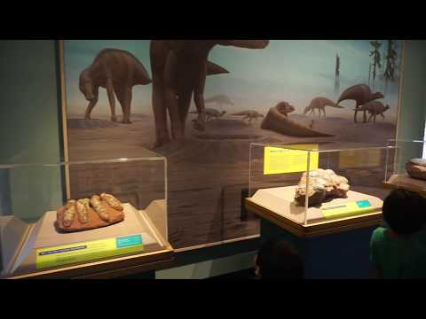 DINOSAUR MUSEUM VISIT | THE ACADEMY OF NATURAL SCIENCES of Drexel University | Philadelphia