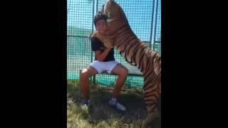Cyrk ze zwierzętami 2016 - tygrysie pieszczoty