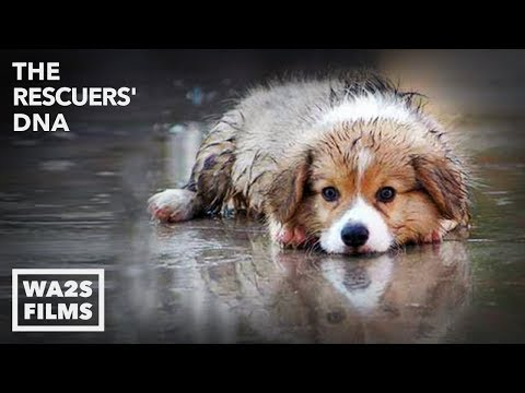 Thumbnail: WET PUPPY RESCUED FROM FLOOD by Forgotten Dogs with Hope For Paws + UPDATE VIDEO! The Rescuers DNA