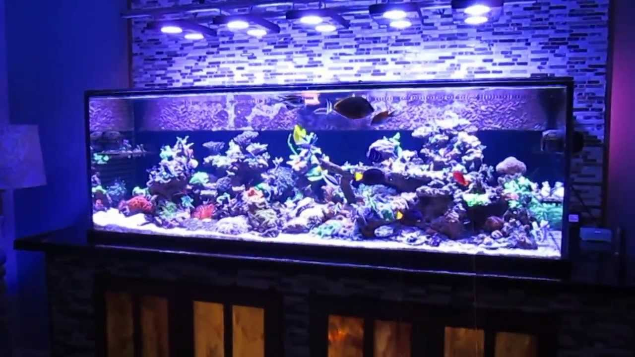 Fish aquarium tanks for sale - Saltwater Fish Tank Reef Aquarium Myreefliving Ben 200 Gallon Super Efficient Sps Dominated Youtube