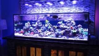 Saltwater fish tank reef aquarium MyReefLiving ( Ben 200 Gallon Super Efficient SPS Dominated )