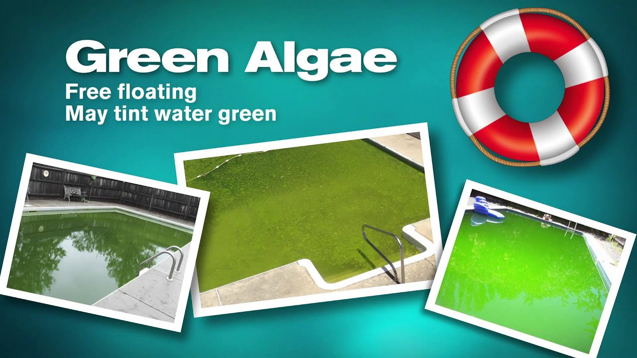 Kill and prevent green mustard and black pool algae - Black algae removal swimming pool ...