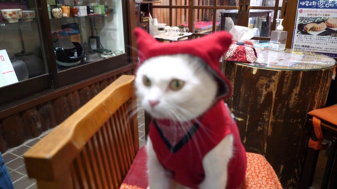 忍者になりきる猫