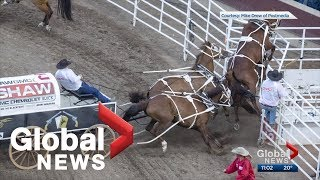 Another horse injured at Calgary Stampede's 'half mile of hell'