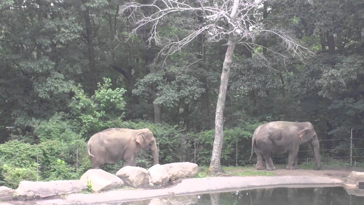 Elephant Animals Asia