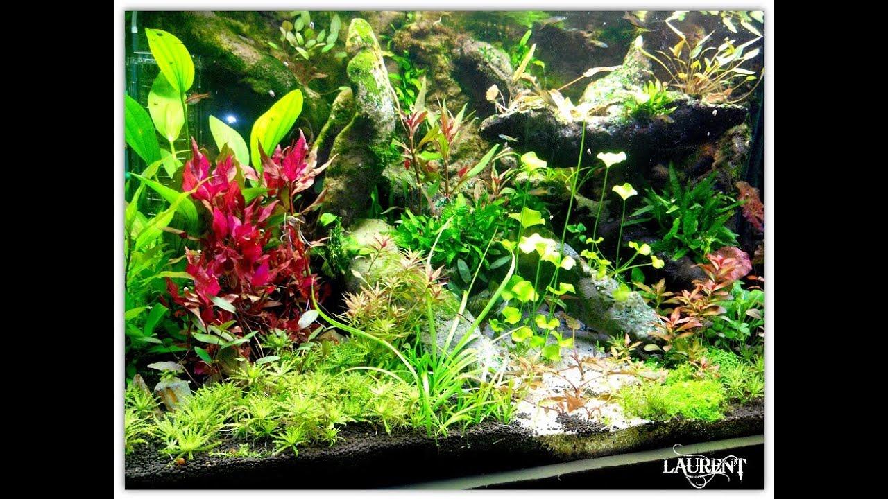 Mousse Decor Aquarium