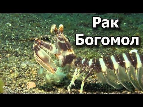 Рыбалка на Морских Раков. Рак Богомол. Отличный Улов.