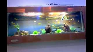 Aquarium Retail Outlet Shop Of Aquarium Design India Spencer Plaza In Chennai India