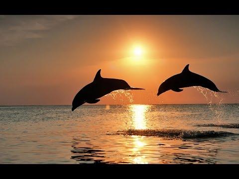 2 HOURS - Relax Sounds nature - Dolphin, Ocean, Deep Sleep, Meditation - Spa, Reiki, Massage