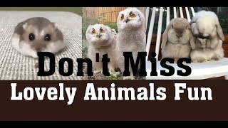 Latest Lovely Animals Funny Video 2019