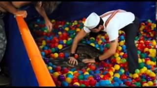 Jackass  2 anaconda ball pit