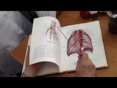 Тромбоэмболия легочной артерии (ТЭЛА) - симптомы, лечение